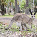 Datos interesantes sobre Australia.  Los hechos más sorprendentes sobre Australia